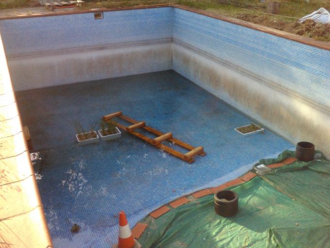 Convertir una piscina en un ecosistema sostenible 1