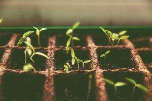 La agricultura ecológica, base de una alimentación saludable