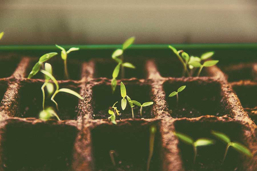 Plantas en germinación
