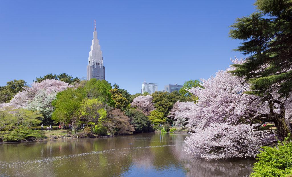 Jardín nacional Shinjuku Gyoen en Tokyo