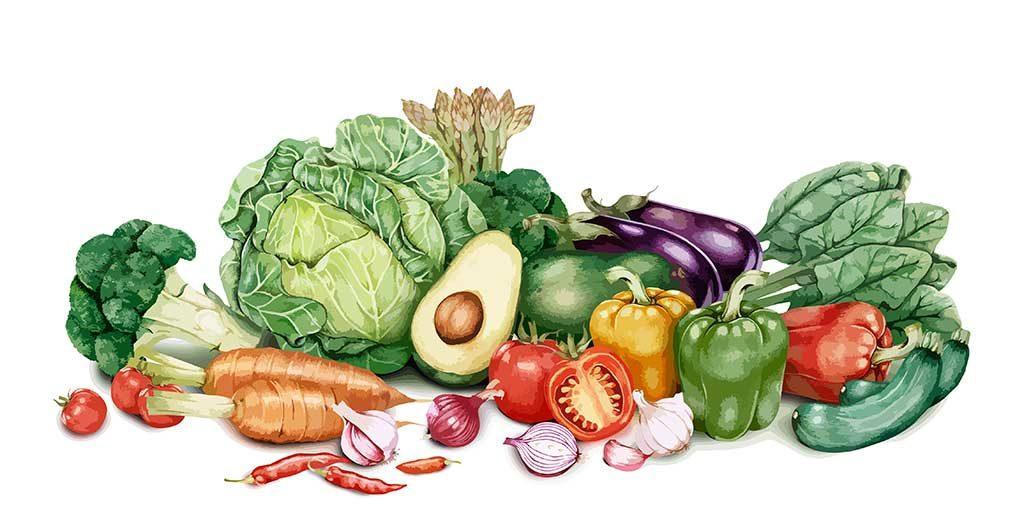Aprendiendo a comer mejor, las dietas específicas y los procesos digestivos