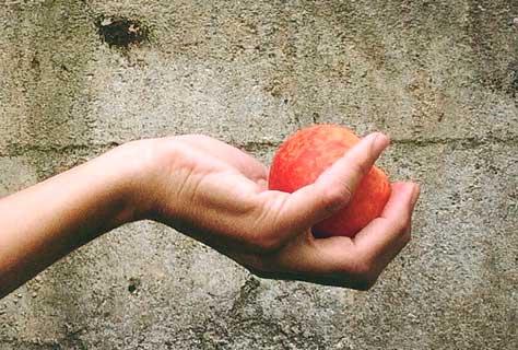 Mano con pulgar oponible, característica de los frugívoros