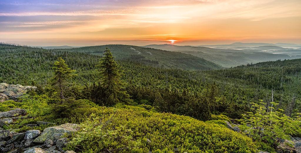 El bosque nos conecta con nuestra esencia más ancestral, con lo más verdadero de nosotros
