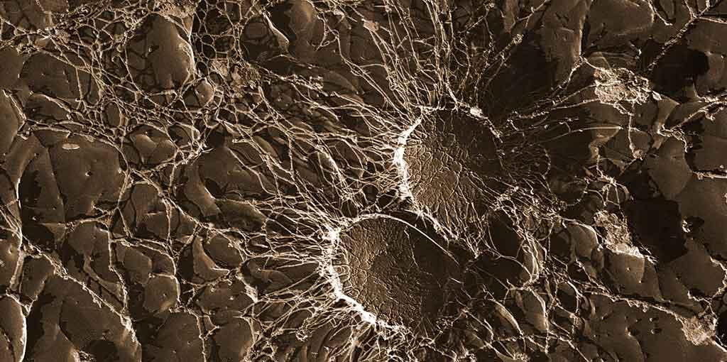Bacteria de la microbiota humana