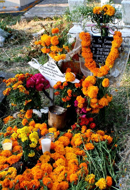 Coloridos caminos de ofrendas con flores de Cenpaxuchitl hacia as tumbas en los cementerios