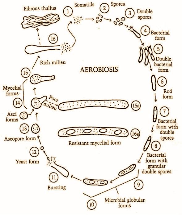 Aerobiosis de Gaston Naessens