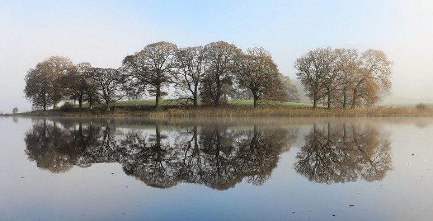 Características que han de tener los árboles alrededor de una piscina